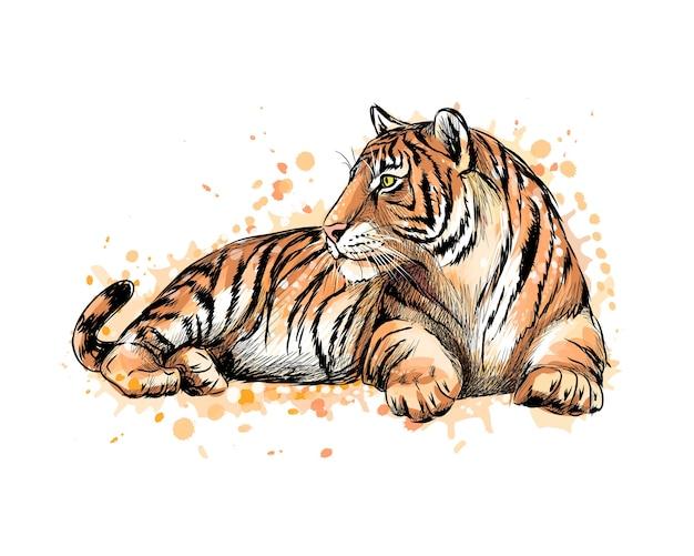 Retrato de un tigre acostado de un toque de acuarela, boceto dibujado a mano. ilustración de pinturas Vector Premium