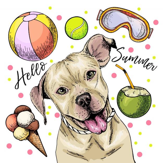Retrato del vector del perro del pit bull terrier. hola ilustración de dibujos animados de verano. Vector Premium