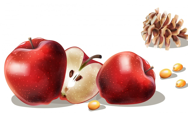 Rodajas de manzana, bayas amarillas y cono de coníferas Vector Premium