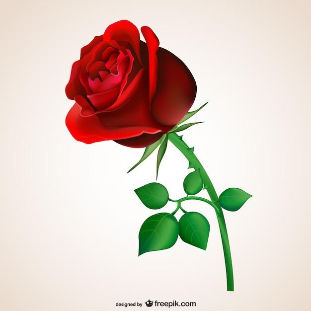 Rosa Roja Con Hojas Descargar Vectores Gratis