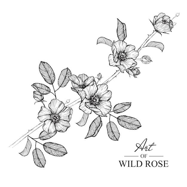 Rosa Silvestre Hoja Y Dibujos De Flores Vintage Dibujado A Mano