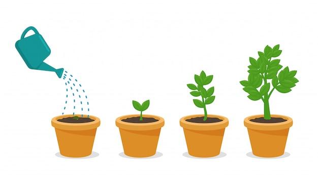 Las semillas que reciben tierra y agua completas están creciendo en una maceta. Vector Premium