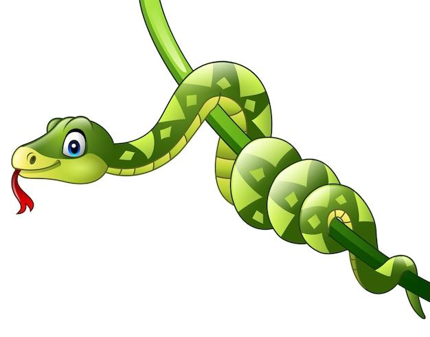 Dibujos Animados De Color Verde: Serpiente Verde De Dibujos Animados En Rama