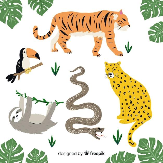 Set de animales tropicales dibujados a mano vector gratuito