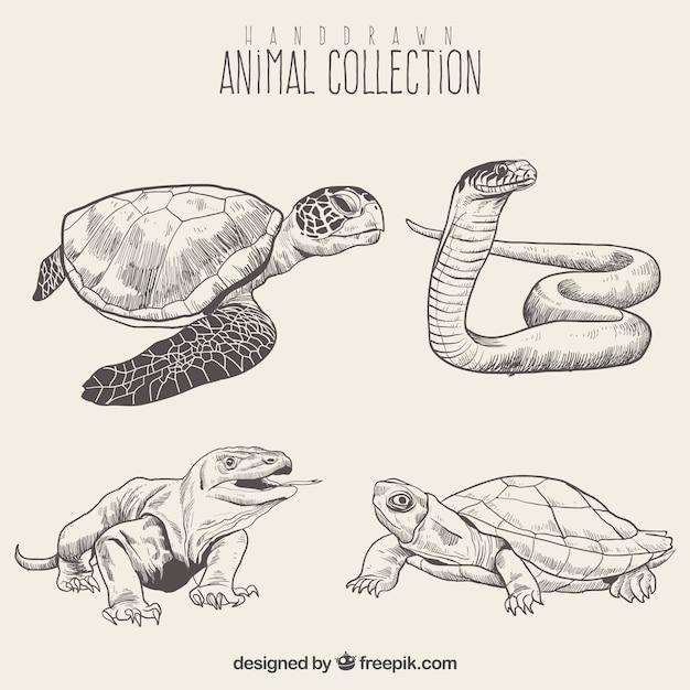 Set de bosquejo de reptiles Vector Premium
