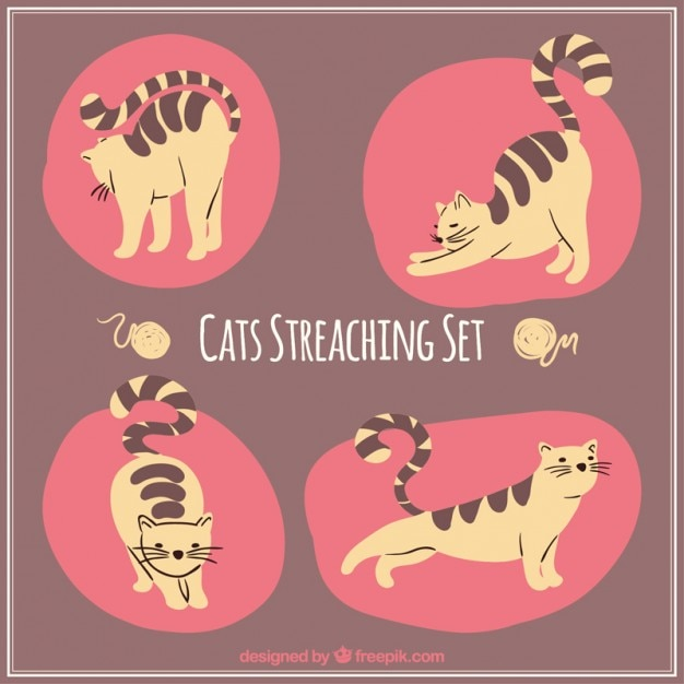 Set de gatos estirándose Vector Gratis