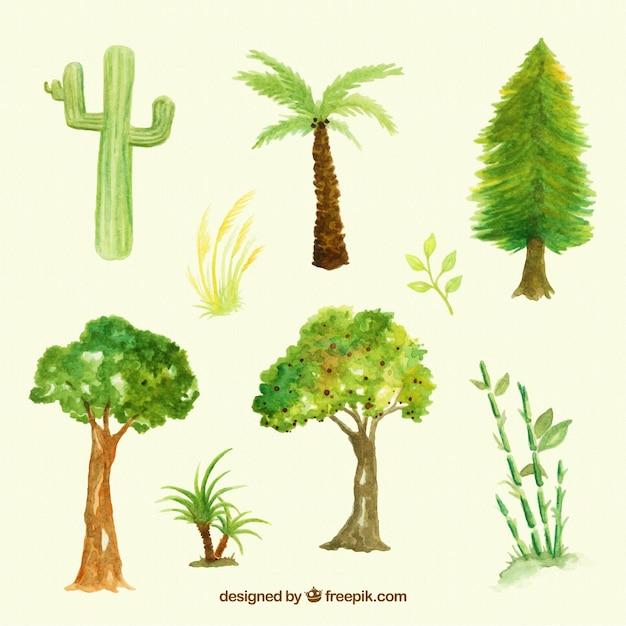 Set de tipos de rboles y plantas de acuarela descargar for Arboles plantas y flores