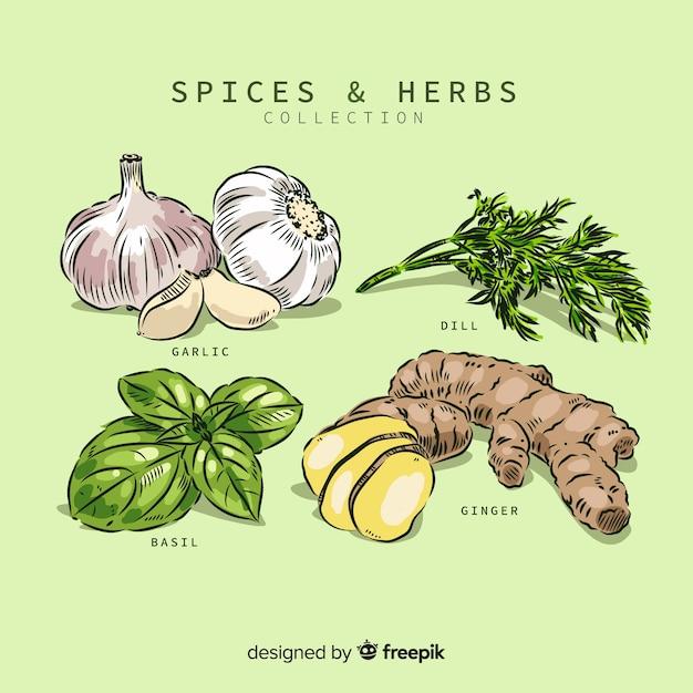 Set de hierbas aromáticas y especias vector gratuito