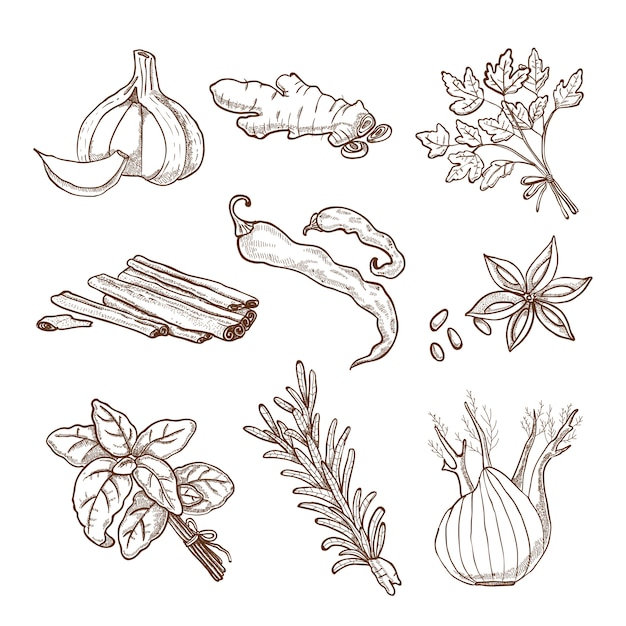 Set de hierbas y especias dibujados a mano vector gratuito