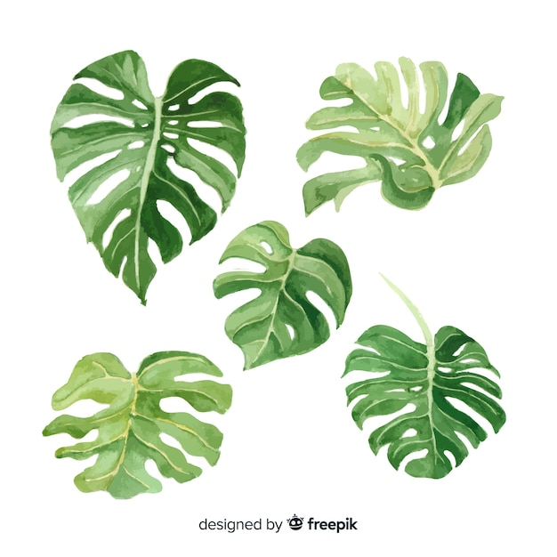 Set hojas de monstera acuarela vector gratuito