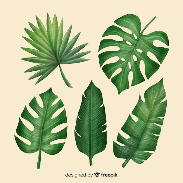 Set de hojas tropicales realistas vector gratuito