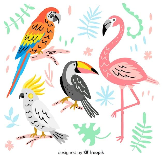 Set de pájaro exótico dibujado vector gratuito