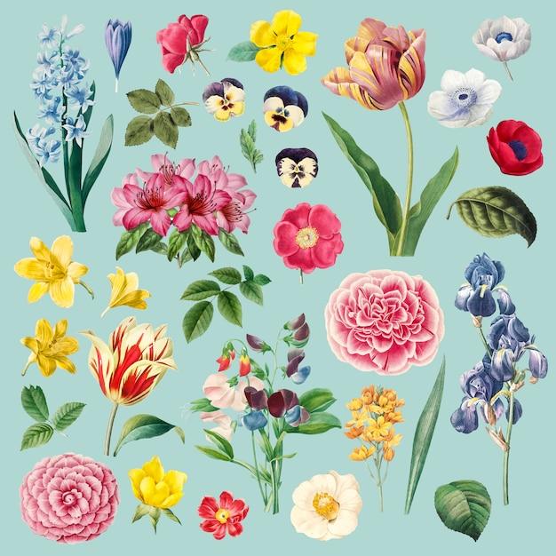 Set de pintura de diferentes flores. vector gratuito