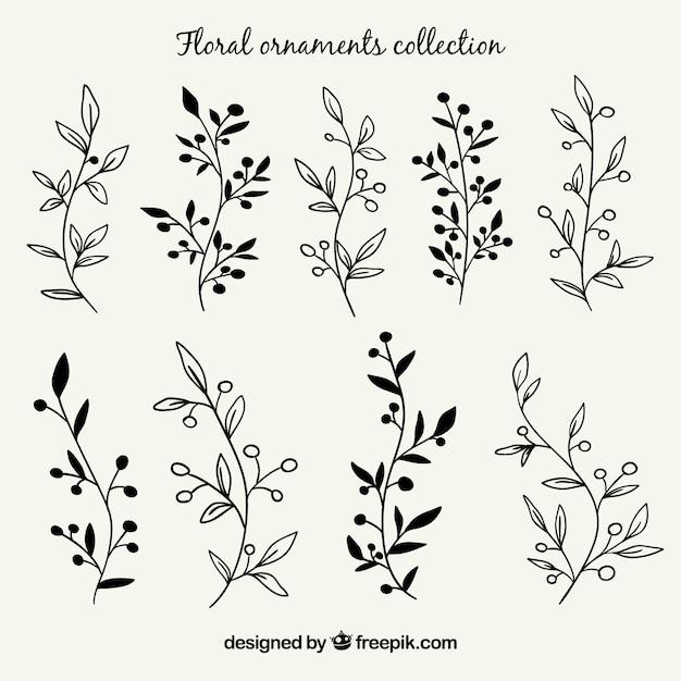 Set de ramas con hojas dibujadas a mano | Vector Gratis