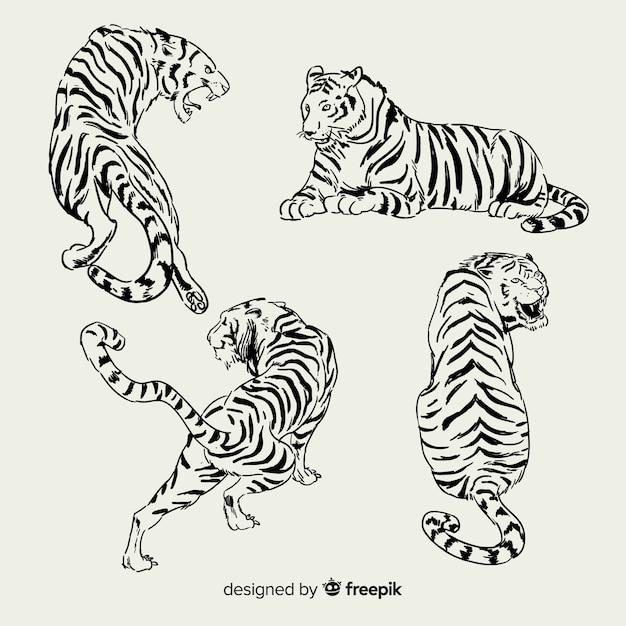 Set de tigres salvajes dibujados vector gratuito