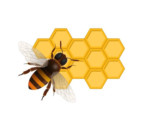 Símbolo de nutrición orgánica dulce con abeja Vector Premium