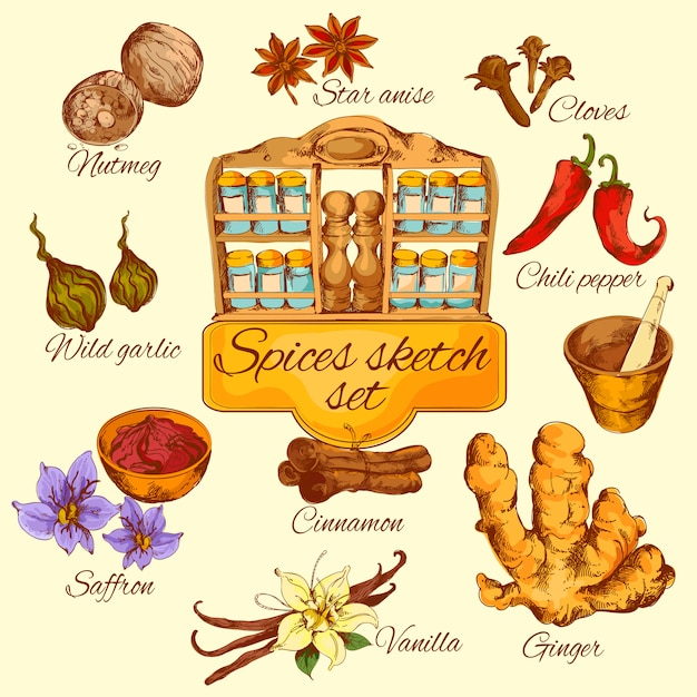 Spices sketch colored vector gratuito