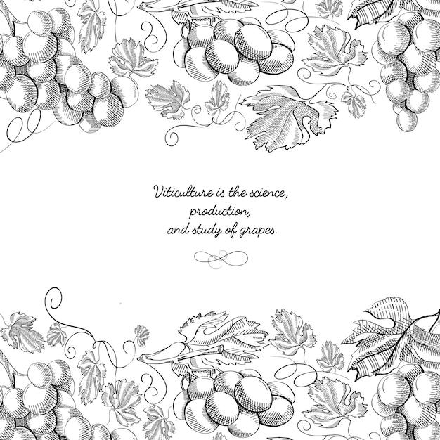 Superior e inferior horizontal elegante adorno de desplazamiento grabado frontera racimos de uva vector gratuito