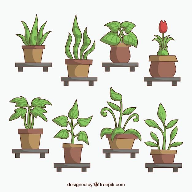 Surtido de diferentes plantas con macetas descargar for Imagenes de plantas en macetas