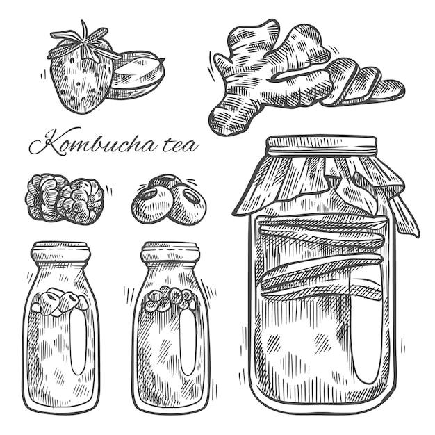 Té de kombucha dibujado a mano vector gratuito