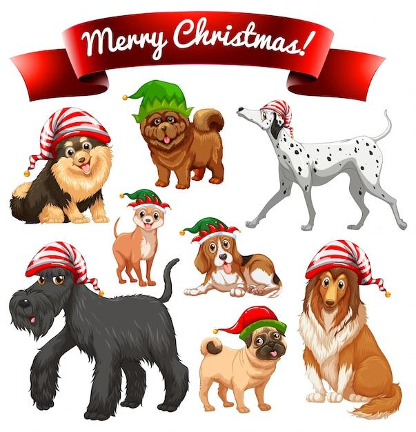 Tema de navidad con perros en sombreros de elfo | Descargar Vectores ...