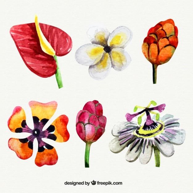 Tipos de flores ex ticas de acuarela descargar vectores gratis - Todo tipo de plantas con sus nombres ...
