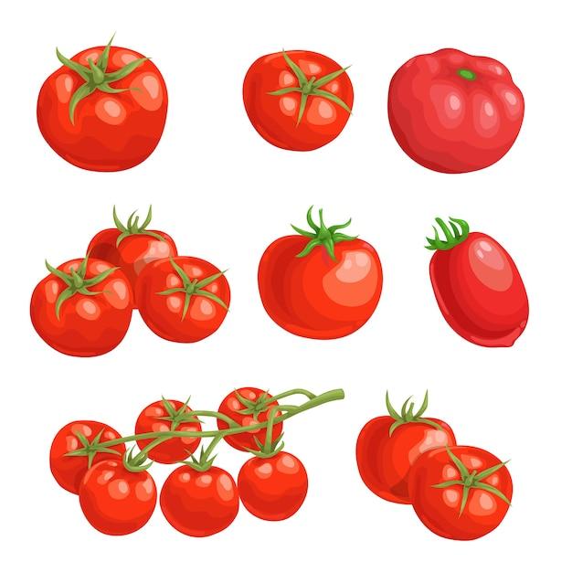 Tomates frescos de dibujos animados. verduras rojas enteras adentro. tomates frescos de granja individuales y grupales. ilustraciones sobre fondo blanco. Vector Premium