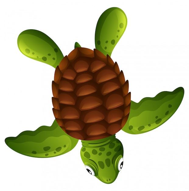 Una tortuga de mar verde sobre fondo blanco vector gratuito