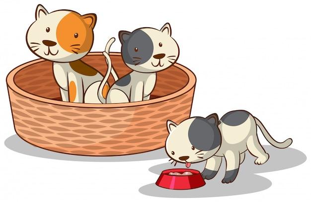 Tres gatos en el fondo blanco vector gratuito