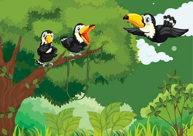 Tucanes en la selva vector gratuito