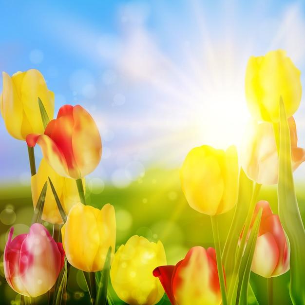 Tulipanes púrpuras y amarillos contra el cielo. Vector Premium