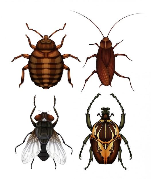 Un conjunto de insectos de enfermedades | Descargar Vectores Premium