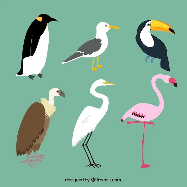 Variedad de aves vector gratuito