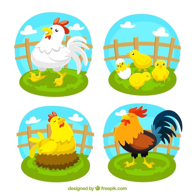 gallos en sus primeras peleas - YouTube