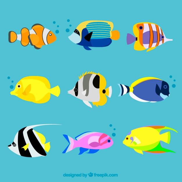 variedad de peces ex ticos descargar vectores gratis