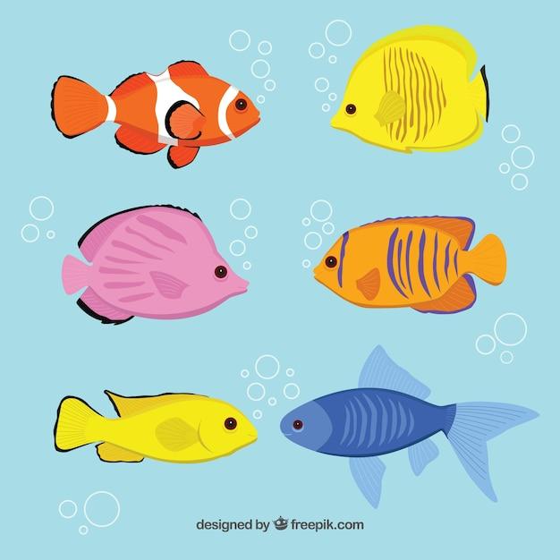 Variedad de razas de peces descargar vectores premium for Variedad de peces