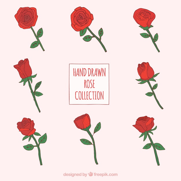 Variedad De Rosas Rojas Decorativas Descargar Vectores Gratis