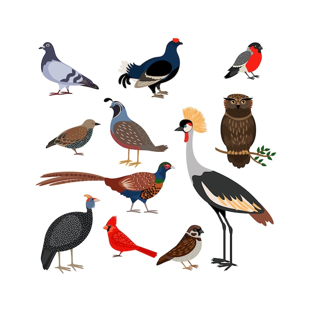 Vector de aves iconos aislados Vector Premium