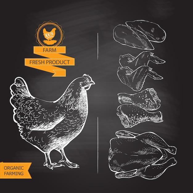 Vector de carne de pollo Vector Premium