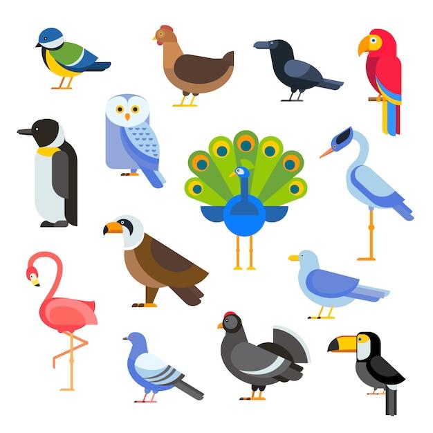 Vector conjunto de aves ilustración aislada Vector Premium