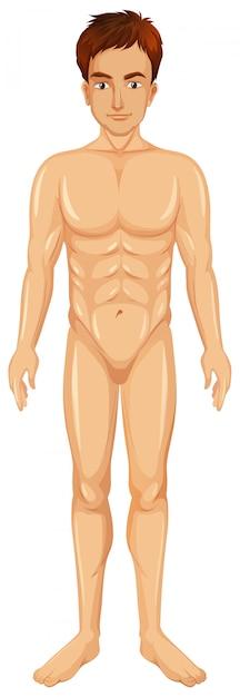 Un vector del cuerpo del hombre vector gratuito
