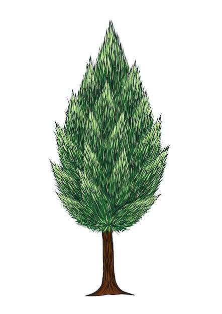 Vector de árbol de pino sobre fondo blanco   Descargar Vectores Premium
