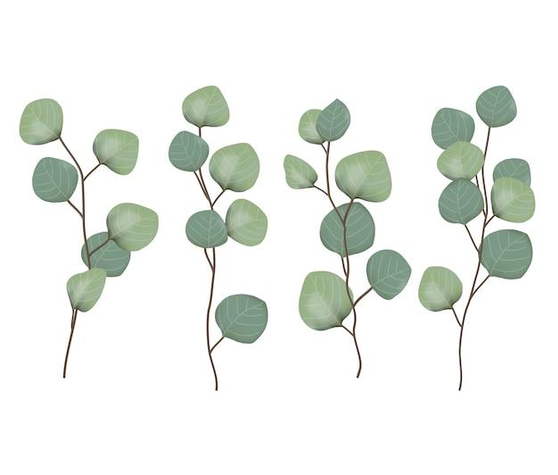 Vector de hojas de eucalipto Vector Premium