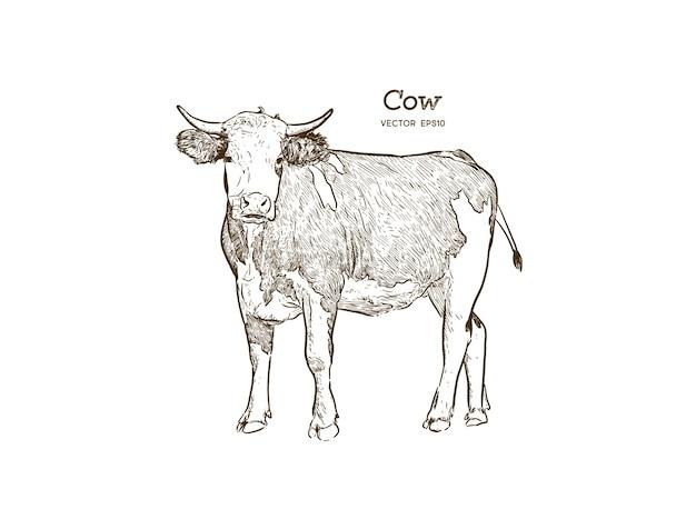 Vector de ilustración de dibujo de vaca Vector Premium