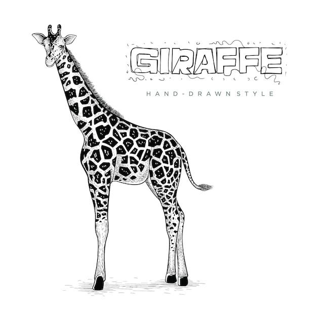 Vector de jirafa realista, ilustración de animal dibujado a mano Vector Premium