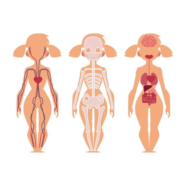 Vector personas órganos internos anatomía, estructura Vector Premium