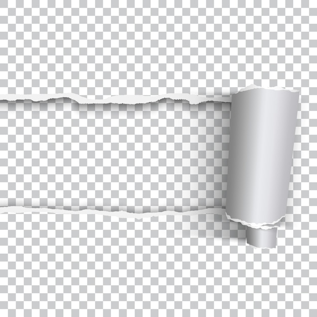 Vector realista papel rasgado con borde enrollado sobre fondo transparente Vector Premium