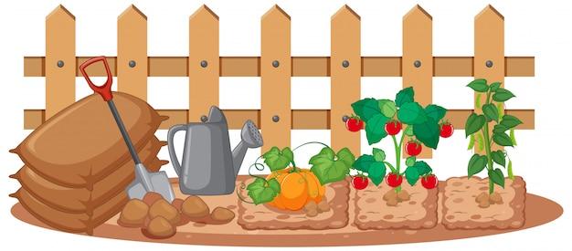 Verduras que crecen en el jardín sobre fondo blanco. vector gratuito