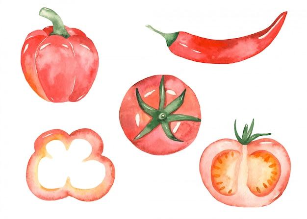 Verduras rojas en estilo acuarela Vector Premium
