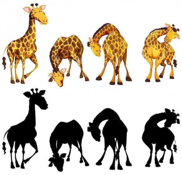 Versión de silueta, color y contorno de cuatro jirafas vector gratuito